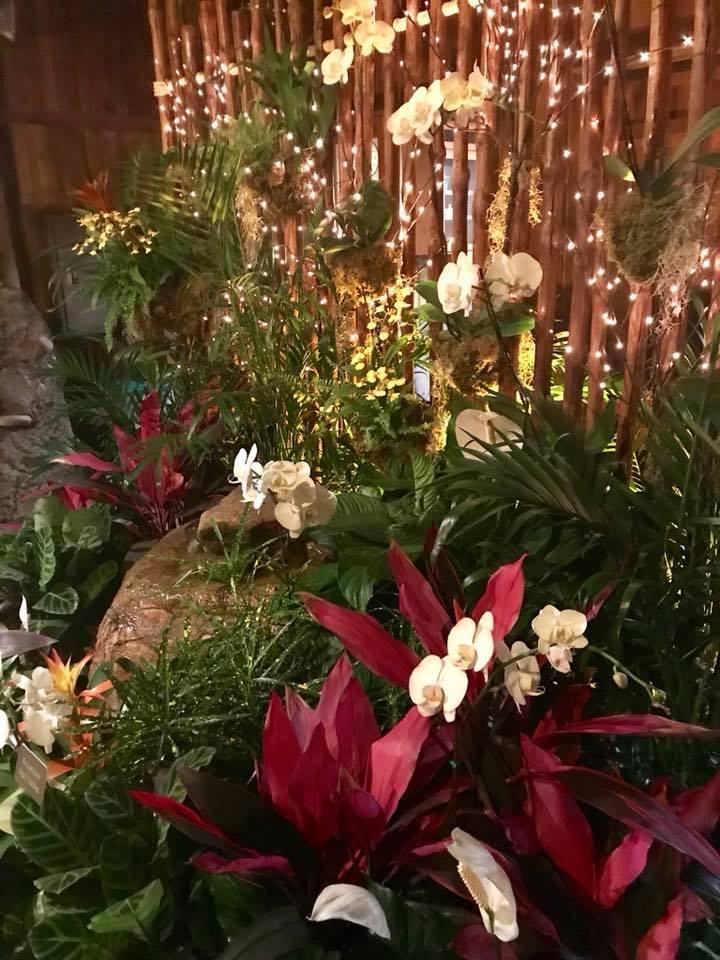 Orchid Escape photo